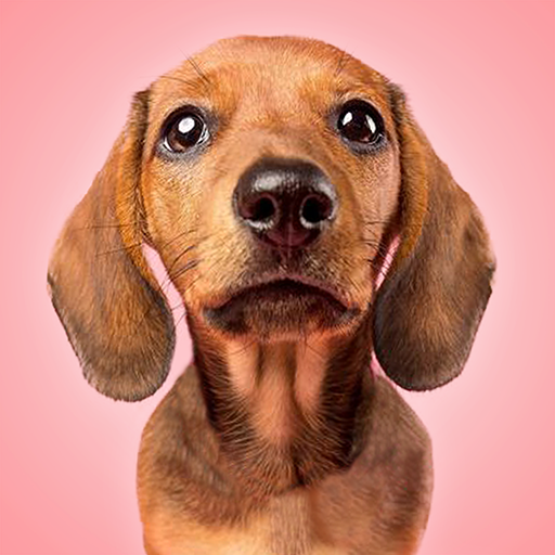 Talking Dogs 1.1.5 MOD APK Dwnload – free Modded (Unlimited Money) on Android