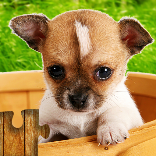 Dogs Jigsaw Puzzles Game – For Kids & Adults  28.5 MOD APK Dwnload – free Modded (Unlimited Money) on Android