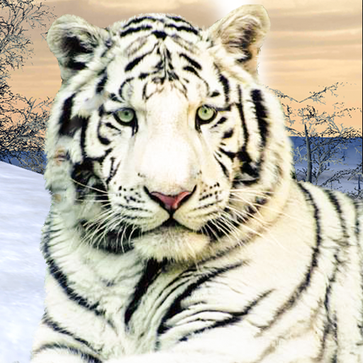 Wild White Tiger: Jungle Hunt 2021 1.6 MOD APK Dwnload – free Modded (Unlimited Money) on Android