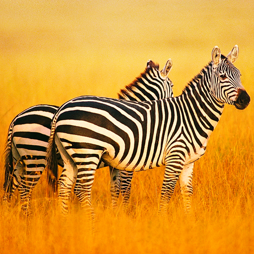 The Zebra 1.0.7 MOD APK Dwnload – free Modded (Unlimited Money) on Android